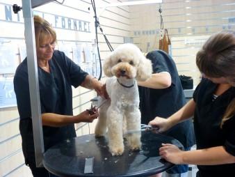 Corte a tijeras para perro