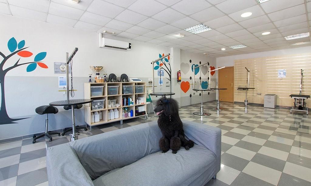 Escuela de peluquería canina en Málaga