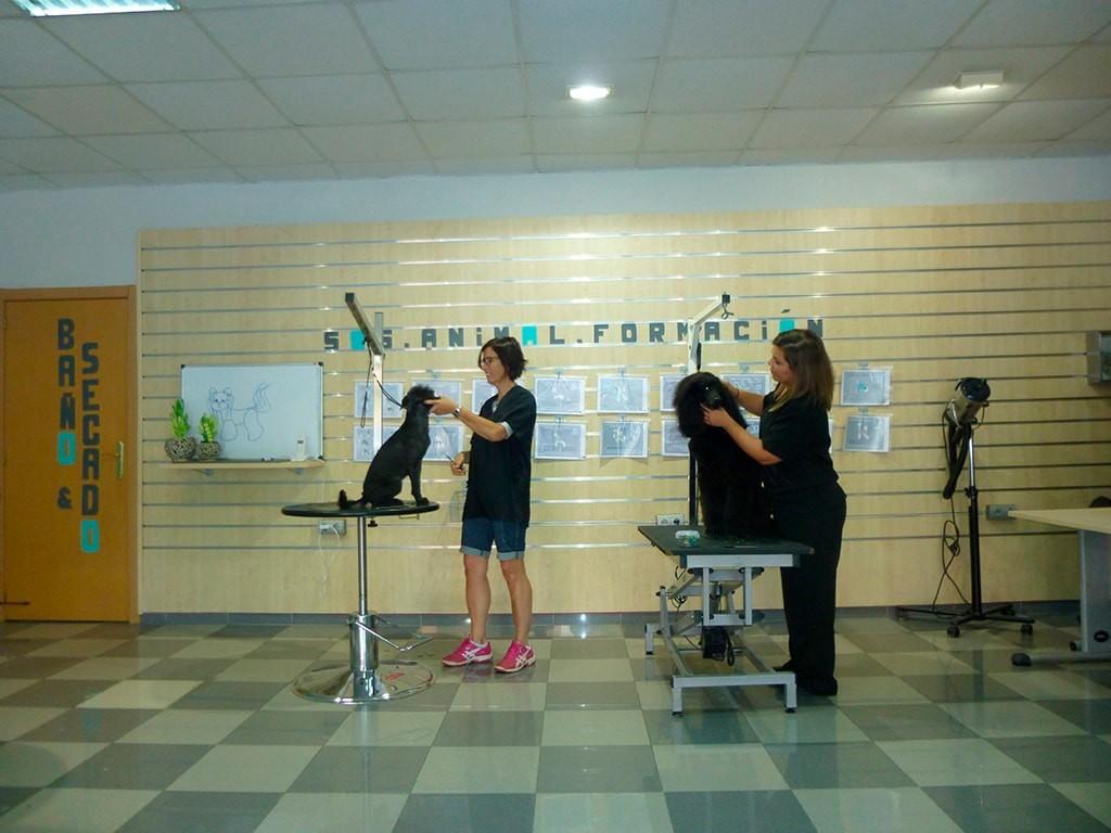 Academia de peluquería canina SOS Animal