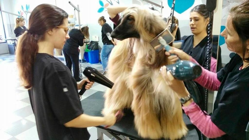 Curso intensivo de estilismo canino