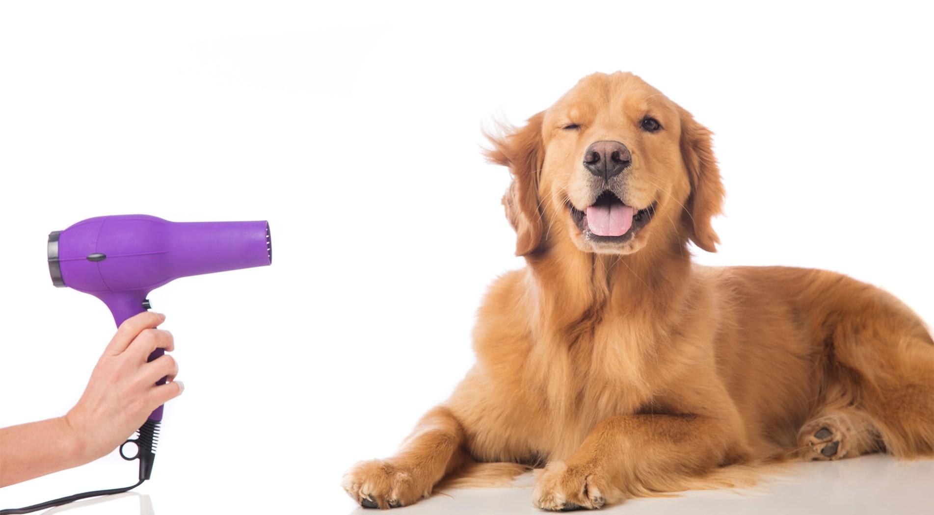 Curso de peluquería canina