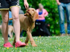 Curso educación y etología canina