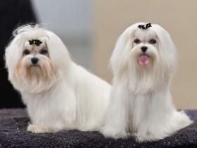 Arregla el pelo a tu perro