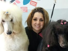 Curso fin de semana peluqueria canina y felina